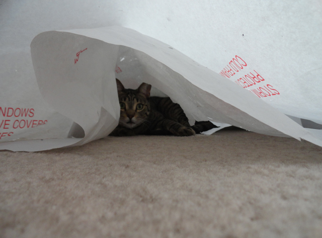 I feel as safe inside my faith as my cat Laska does in tissue