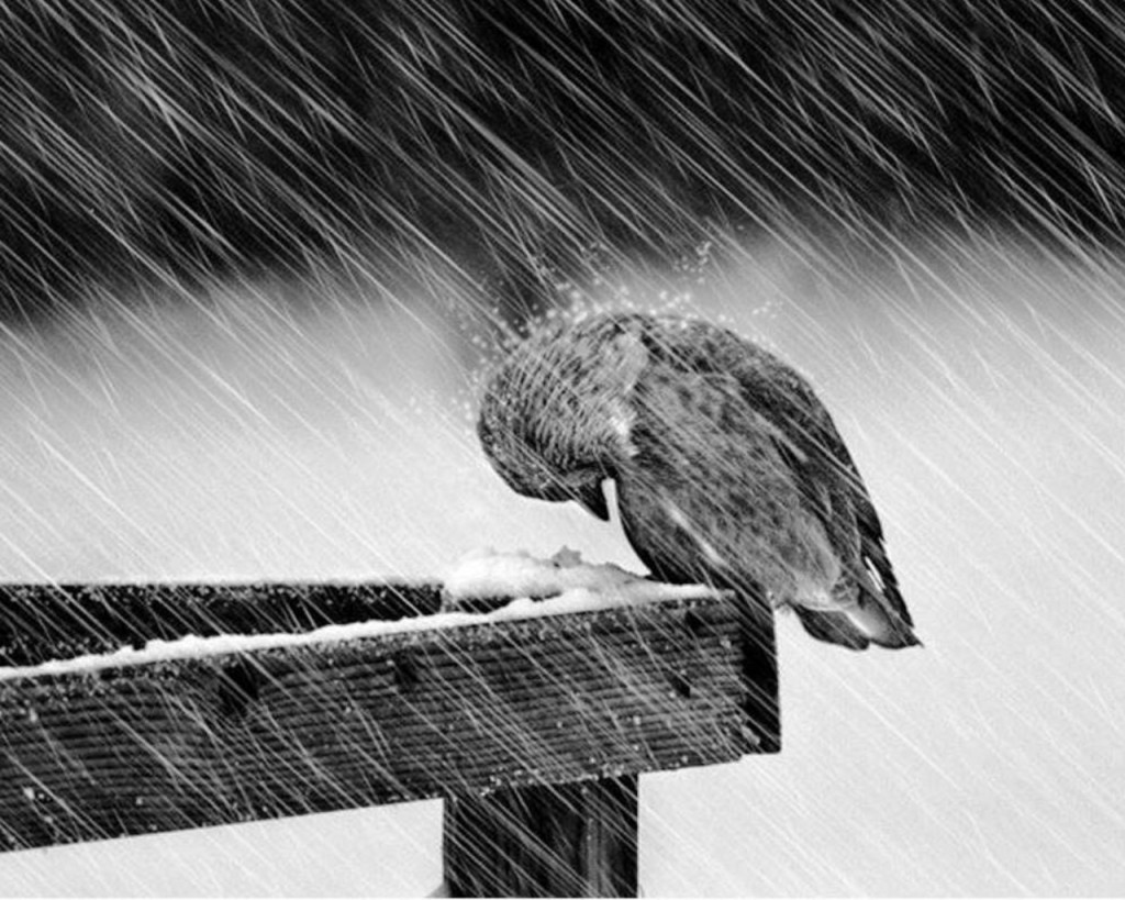 the sad way to fight the struggle is to give up and let the rain come